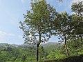 Views around Munnar, Kerala (117).jpg