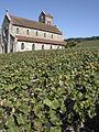 Vigne Pinot noir (Leuvrigny) Cl.J.Weber04 (23382046300).jpg
