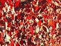 Vigne Septembre (251920491).jpeg