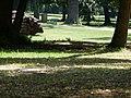 Villa Reale Monza 04-07-15 n18.jpg