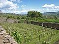 Vineyard, Bolton Castle - geograph.org.uk - 1391771.jpg