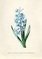 Vintage Flower illustration by Pierre-Joseph Redouté, digitally enhanced by rawpixel 59.jpg