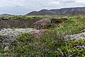 Volcanic landscape taken from the hiking trail Reykjavegur, Iceland 16.jpg
