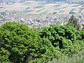 Vue depuis le château du Hohlandsbourg (654 m) - ville (Wettolsheim).jpg