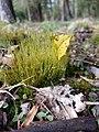 WW Moss & Lichens TMS.jpg