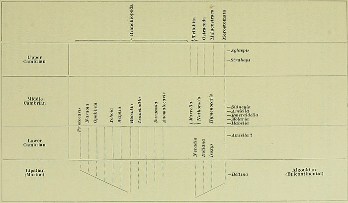 Walcott Cambrian Geology and Paleontology II table p156.jpg