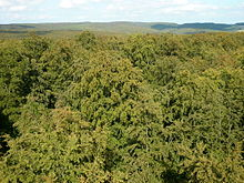 Wald – Wikipedia