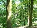 Wald RheinRuhe.jpg