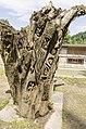 Waldmenschen Skulpturenpfad (Freiburg) jm9927.jpg