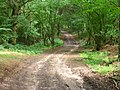 Waldweg bei Holm - geo.hlipp.de - 23967.jpg