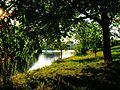 Walnut Tree - panoramio.jpg