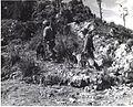 War Dog patrol on Okinawa, June 1945 (5856654660).jpg