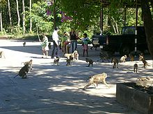 220px Wat Tham Khan monkeys