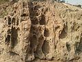 Water eroded Khondalite rocks Tenneti park, Visakhapatnam.jpg