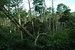 White Cypress swamp.jpg