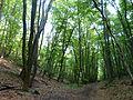 Wienerwald Weg.jpg