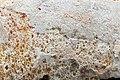 WikiCheese - Mimolette extra vieille 04.jpg