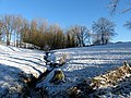 Winter in Steenbergse bossen - panoramio.jpg