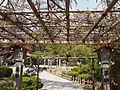 Wisteria tree of Kanahebi-Suijinja shrine.JPG