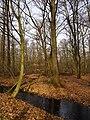 Wolbecker Tiergarten (10).JPG