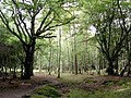 Woodland between Wood Crates and Broom Hill, New Forest - geograph.org.uk - 57401.jpg