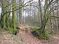 Woodland on Stafford Hill - geograph.org.uk - 1776631.jpg