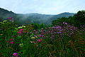 Wv-summer-wildflowers - West Virginia - ForestWander.jpg