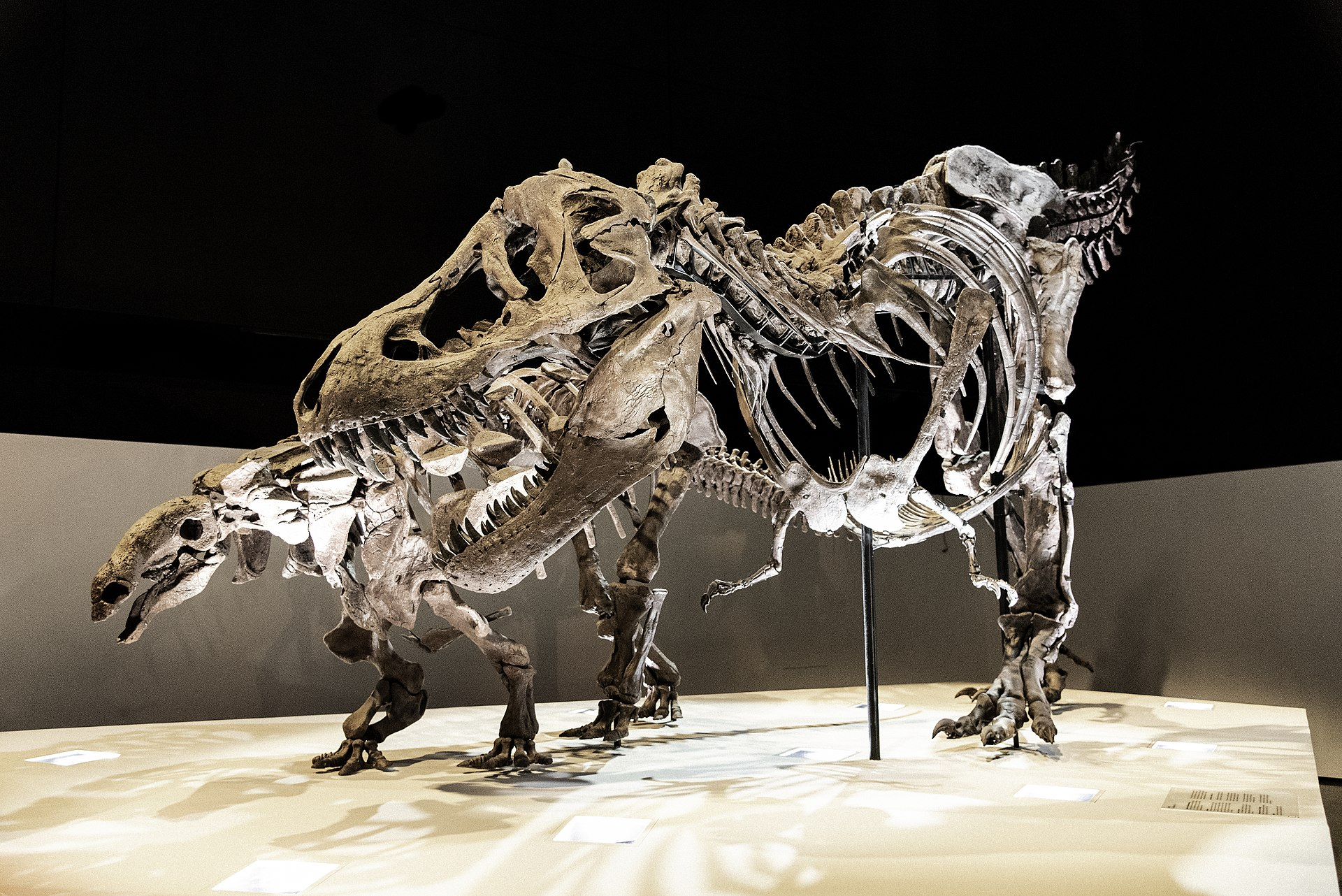 Wyrex Tryannosaurus rex.jpg