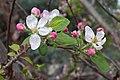 Yuse Call Dis Spring? Why I Oudda - (4544414203).jpg