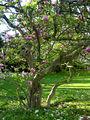 Zürich - Arboretum DSC00041.jpg