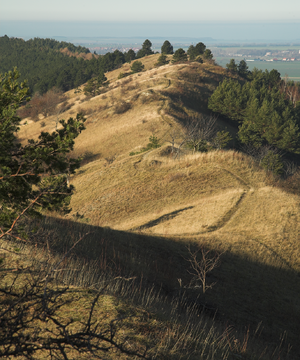 Ziegenberg (Saxony-Anhalt) - Crest of the Ziegenberge ridge, looking NW along the Struvenberg