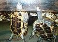 Zoopark Baku 251.jpg