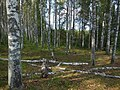 Zubtsovsky District, Tver Oblast, Russia - panoramio (84).jpg