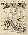 """Let Your Fruit Trees Save Sugar."", ca. 1917 - ca. 1919 - NARA - 512514.jpg"