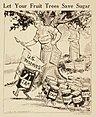 """Let Your Fruit Trees Save Sugar."", ca. 1917 - ca. 1919 - NARA - 512514.jpg"
