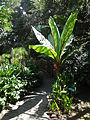 (Jardín Botánico de Quito) pic bb8a9a.JPG