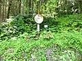 (Other), Awashimaura, Iwafune District, Niigata Prefecture 958-0061, Japan - panoramio (1).jpg