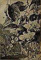 À travers la forêt brésilienne - De l'Amazone aux Andes (1919) (14584656350).jpg