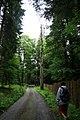 Žofínský prales 5.jpg