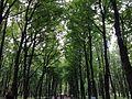 В Летнем саду осень - panoramio.jpg