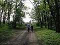 Дендрологічний парк 179.jpg