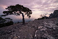 Дерева заказнику Новий Світ.jpg