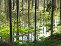 Заболоченный лес. (Waterlogged wood) - panoramio.jpg