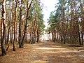 Лесопарк Северный, Воронеж.jpg
