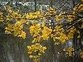 Нягледзячы на тое што восень яшчэ не скончылася, і гэтыя напамінкі пра яе хутка знікнуць - panoramio.jpg