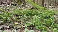 Пантелеймонова криниця-природна краса.jpg