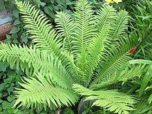 Доклад на тему папоротниковые растения 8035