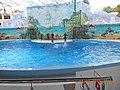 Сочинский дельфинарий парка «Ривьера». 69.jpg