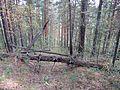 Спуск с Краки. - panoramio - Pesotsky.jpg