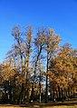 Царникава (Латвия) Золотая осень - panoramio.jpg